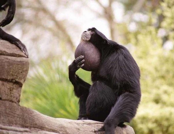 Funny Images: Photos Droles Singes
